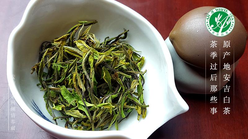 喝了几十年的安吉白茶