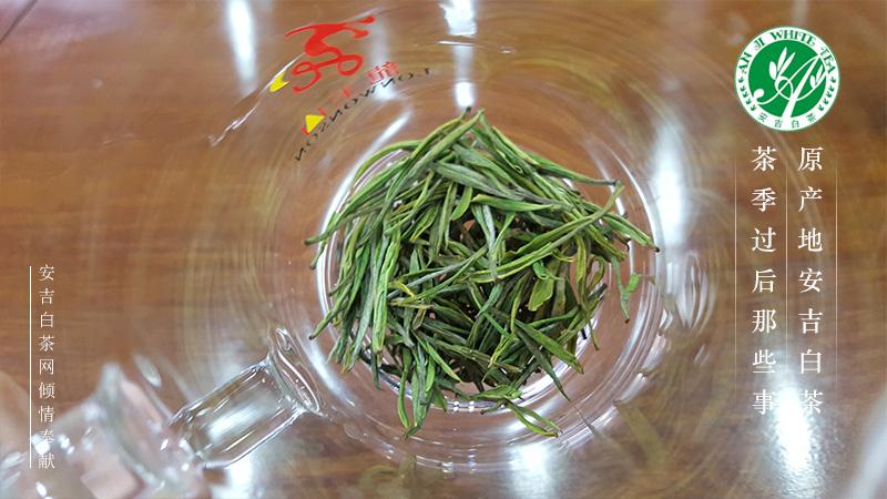 龙王山安吉白茶 安吉白茶品牌 安吉白茶园 潘元清