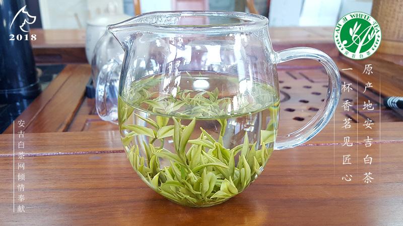 茶树品种 安吉黄金芽 安吉奶白茶 黄金叶